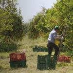 Lavoro agricolo nel documentario Nul homme est une île di Dominique Marchais (Francia, 2017)