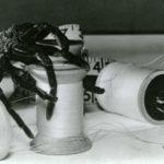 """Una minaccia """"gigante"""" per Grant Williams nel corso di RADIAZIONI B X DISTRUZIONE UOMO di Jack Arnold (The Incredible Shrinking Man, USA 1957)"""