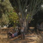 All'ombra della vegetazione nel documentario CittàGiardino di Marco Piccarreda e Gaia Formenti (Italia, 2018)