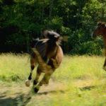 La bellezza del cavallo in Out Stealing Horses di Hans Petter Moland (Norvegia, Svezia, Danimarca 2019)