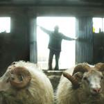 Una suggestiva immagine tratta da Rams - Storia di due fratelli e otto pecore di Grímur Hákonarson (Hrútar, Islanda 2015)