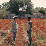 Paolo Sassanelli e Moda Joao, protagonisti del cortometraggio Il potere dell'oro rosso di Davide Minnella (Italia, 2015)