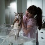 Lavaggio del gatto in Una vita da gatto di Barry Sonnenfeld (Nine Lives, Francia, Cina 2016)