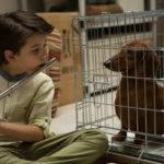 Il piccolo Keaton Nigel Cooke suona per il bassotto in Wiener-Dog di Todd Solondz (USA, 2016)