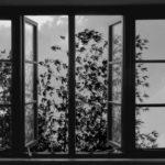 Poesia in digitale nel corso di 24 Frames di Abbas Kiarostami (Francia, 2017)