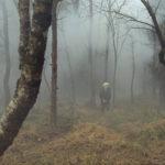 Atmosfere nebbiose nel corso di Valley of Shadows di Jonas Matzow Gulbrandsen (Norvegia, 2017)