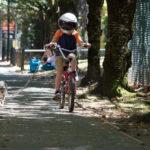 Jacob Tremblay con casco, cane e bicicletta in un momento di Wonder di Stephen Chbosky (USA, Hong Kong 2017)