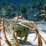 Variegata fauna marina nel documentario Le meraviglie del mare di Jean-Michel Cousteau e Jean-Jacques Mantello (Wonders of the Sea, UK, Francia 2017)