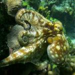 Ancora meraviglie acquatiche in Le meraviglie del mare di Jean-Michel Cousteau e Jean-Jacques Mantello (Wonders of the Sea, UK, Francia 2017)