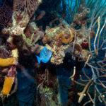 Un'altra suggestiva immagine tratta dal documentario Le meraviglie del mare di Jean-Michel Cousteau e Jean-Jacques Mantello (Wonders of the Sea, UK, Francia 2017)