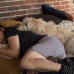 Riposino con cani per Adam Pally in Dog Days di Ken Marino (USA, 2018)