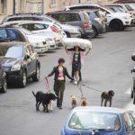 Professione dog-sitter ne Il colpo del cane di Fulvio Risuleo (Italia, 2019)