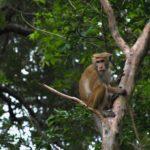 Scimmia sugli alberi nel documentario Cemetery di Carlos Casas (Francia, UK, Polonia, Uzbekistan 2019)
