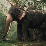 La maestosità dell'elefante nel documentario Cemetery di Carlos Casas (Francia, UK, Polonia, Uzbekistan 2019)